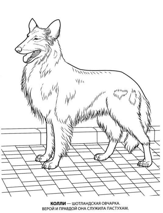новогодние раскраски с символом 2018 года - Собакой 6