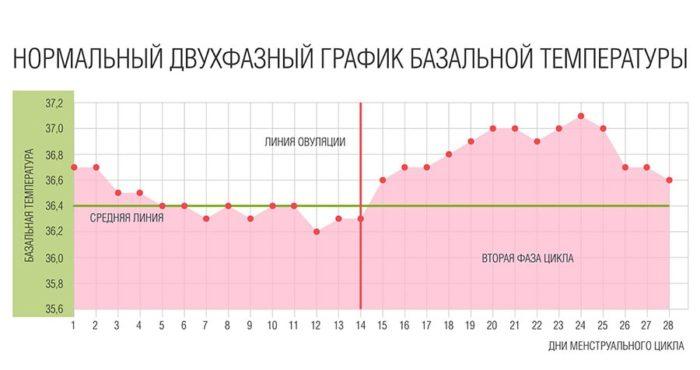фото графика базальной температуры 3