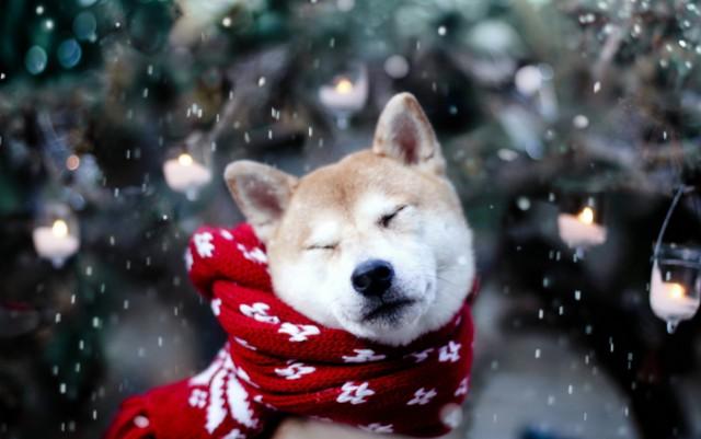 новогодние картинки с символом Собаки 2018, галерея на фото 12