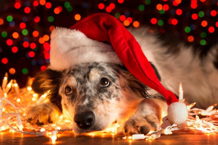 новогодние картинки с символом Собаки 2018, галерея на фото 14