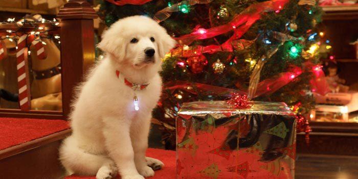 новогодние картинки с символом Собаки 2018, галерея на фото 2