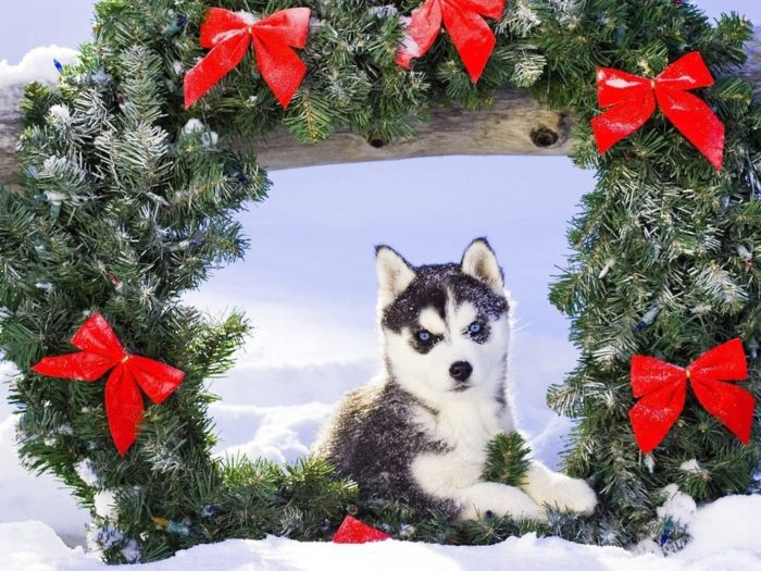новогодние картинки с символом Собаки 2018, галерея на фото 8